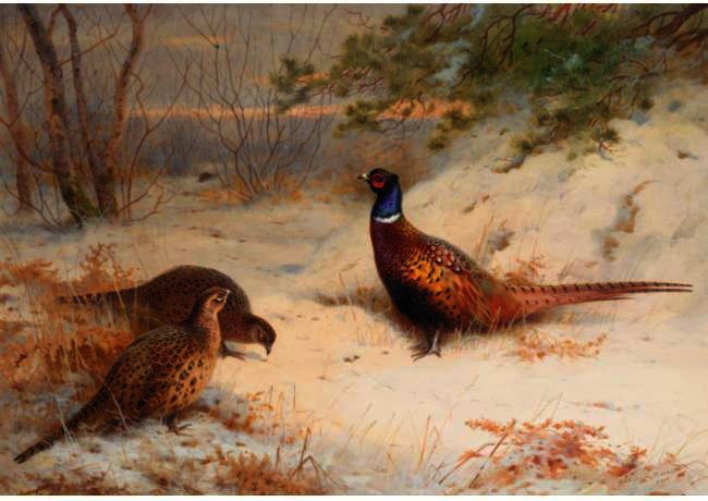 A Winter Dawn, Pheasants In The Snow, Watercolour by Archibald Thorburn (1860-1935, United Kingdom)