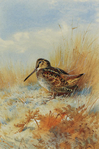 A Woodcock At The Edge Of A Field, Watercolour by Archibald Thorburn (1860-1935, United Kingdom)