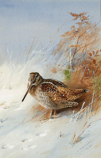 A Woodcock In Winter, Watercolour by Archibald Thorburn (1860-1935, United Kingdom)