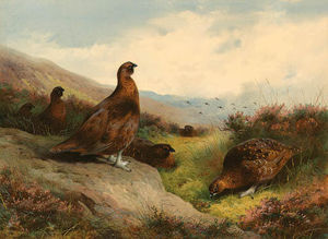 Archibald Thorburn - Autumn Glory. Red Grouse On The Scottish Moors