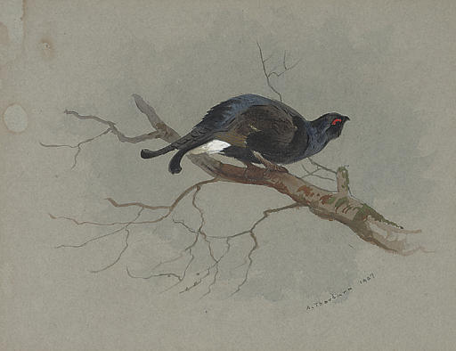 Black Grouse In A Tree, Watercolour by Archibald Thorburn (1860-1935, United Kingdom)