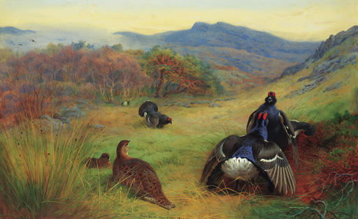 Blackcock Fighting, Watercolour by Archibald Thorburn (1860-1935, United Kingdom)