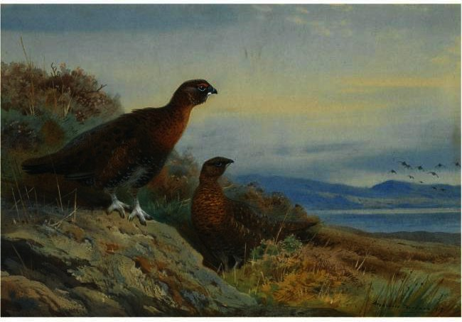 Brace Of Grouse, Watercolour by Archibald Thorburn (1860-1935, United Kingdom)