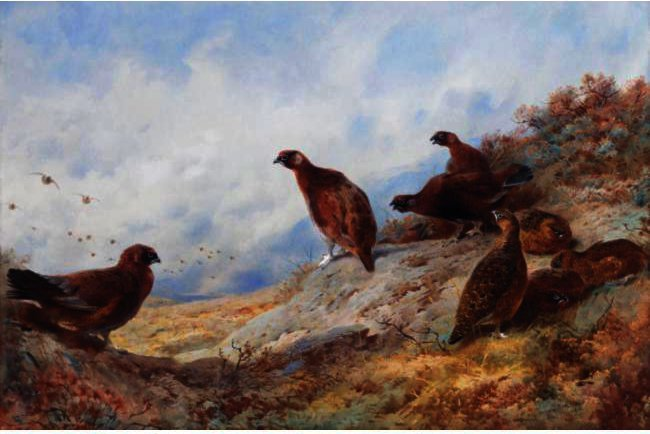 Cock And Hen Red Grouse High On The Moor by Archibald Thorburn (1860-1935, United Kingdom) | Oil Painting | ArtsDot.com