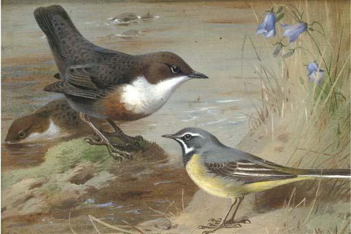 Dippers And A Grey Wagtail On The Bank Of A Stream, Watercolour by Archibald Thorburn (1860-1935, United Kingdom)