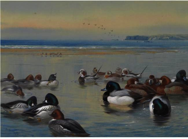 Ducks Along The Shoreline, Watercolour by Archibald Thorburn (1860-1935, United Kingdom)
