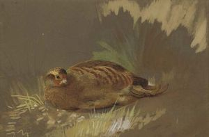 Archibald Thorburn - Dusting Partridge 1