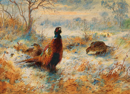 Frost At Sunrise. Pheasant Amongst Bracken, Watercolour by Archibald Thorburn (1860-1935, United Kingdom)