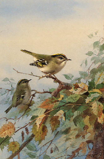 Goldcrests, Watercolour by Archibald Thorburn (1860-1935, United Kingdom)