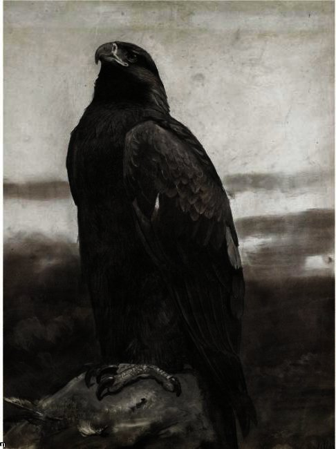 Golden Eagle, Watercolour by Archibald Thorburn (1860-1935, United Kingdom)
