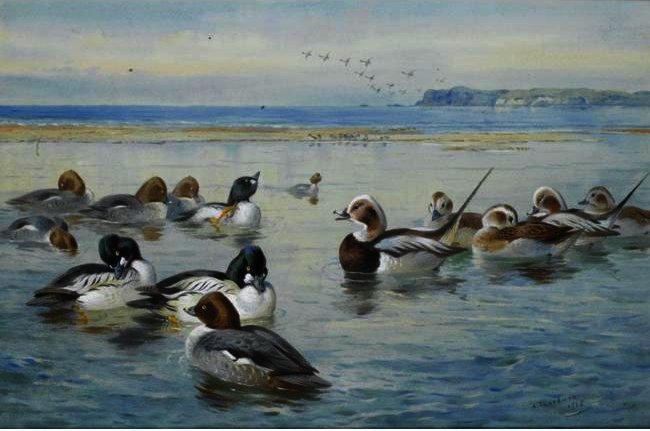 Goldeneyes And Longtails, Watercolour by Archibald Thorburn (1860-1935, United Kingdom)
