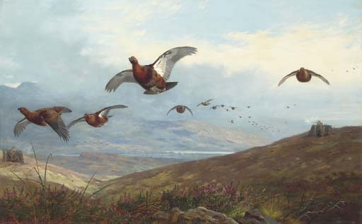 Grouse Shooting, Watercolour by Archibald Thorburn (1860-1935, United Kingdom)