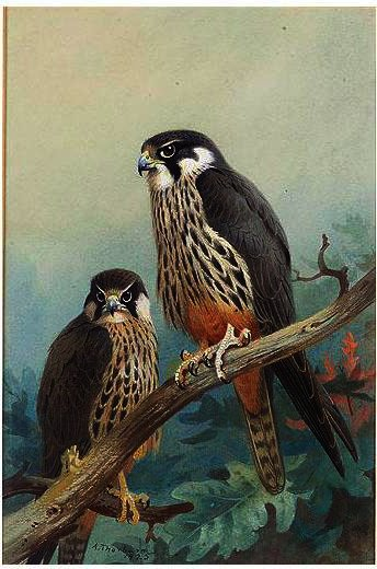 Hobbies, Watercolour by Archibald Thorburn (1860-1935, United Kingdom)