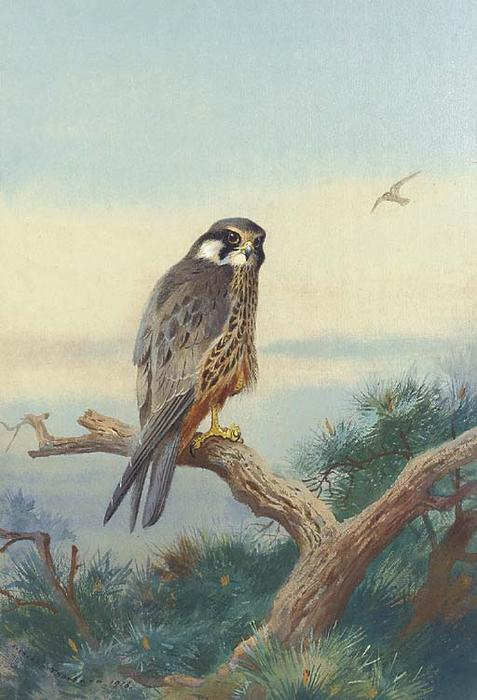 Hobby, Watercolour by Archibald Thorburn (1860-1935, United Kingdom)