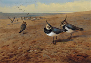 Archibald Thorburn - Lapwings
