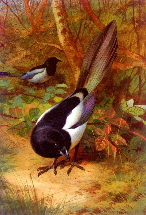 Magpies, Watercolour by Archibald Thorburn (1860-1935, United Kingdom)