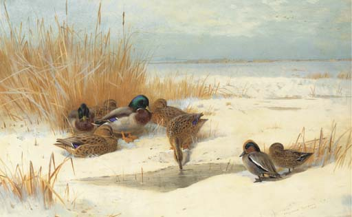 Mallard And Teal In The Snow, Watercolour by Archibald Thorburn (1860-1935, United Kingdom)