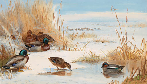 Mallard And Teal On A Frozen Lake, Watercolour by Archibald Thorburn (1860-1935, United Kingdom)