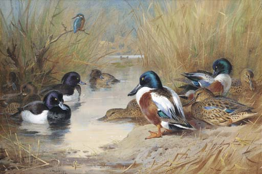 Mallard, Tufted Duck And A Kingfisher At The Water's Edge, Watercolour by Archibald Thorburn (1860-1935, United Kingdom)