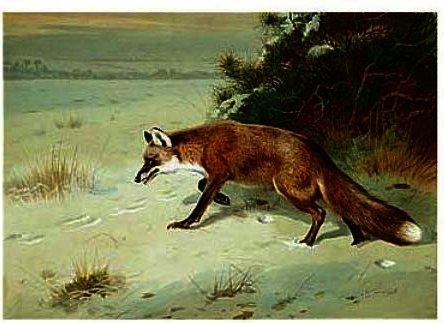 On The Prowl, Watercolour by Archibald Thorburn (1860-1935, United Kingdom)