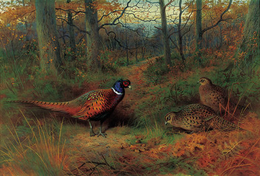 On The Ride. A Cock And Two Hen Pheasant In Autumn, Watercolour by Archibald Thorburn (1860-1935, United Kingdom)