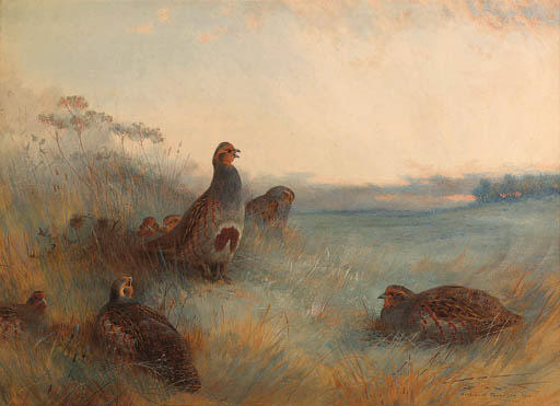 Partridges 'chill Hoar Frost At Dawn', Watercolour by Archibald Thorburn (1860-1935, United Kingdom)
