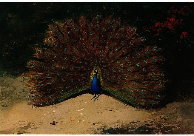 Peacock And Butterfly, Watercolour by Archibald Thorburn (1860-1935, United Kingdom)