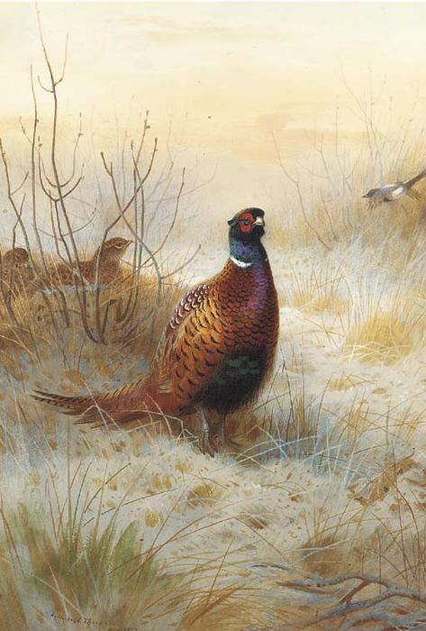 Pheasant In Winter, Watercolour by Archibald Thorburn (1860-1935, United Kingdom)