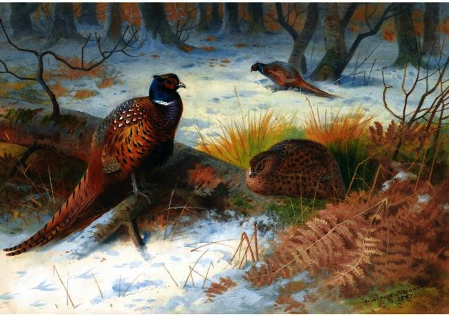 Pheasants In The Snow, Watercolour by Archibald Thorburn (1860-1935, United Kingdom)