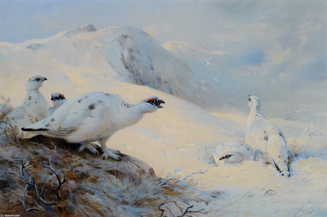 Ptarmigan Calling In The Snow, Watercolour by Archibald Thorburn (1860-1935, United Kingdom)