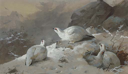 Ptarmigan In Winter Plumage, Watercolour by Archibald Thorburn (1860-1935, United Kingdom)
