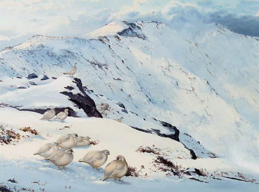 Ptarmigan On The High Tops, Watercolour by Archibald Thorburn (1860-1935, United Kingdom)