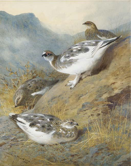 Ptarmigan; Adult Male, Female And Young, Autumn Plumage, Watercolour by Archibald Thorburn (1860-1935, United Kingdom)