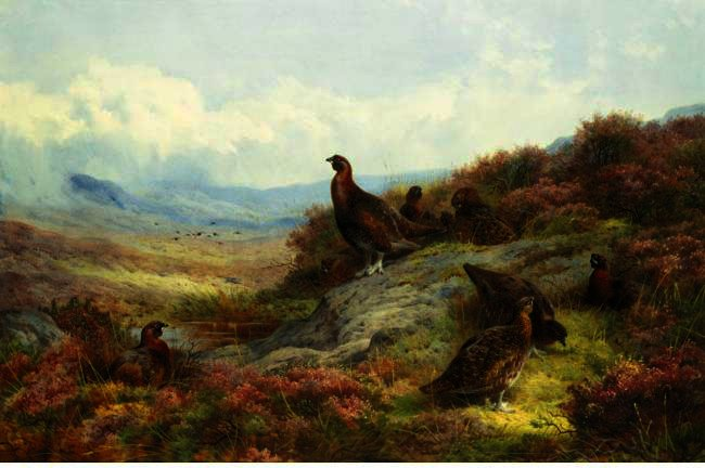 Red Grouse In A Landscape, Watercolour by Archibald Thorburn (1860-1935, United Kingdom)