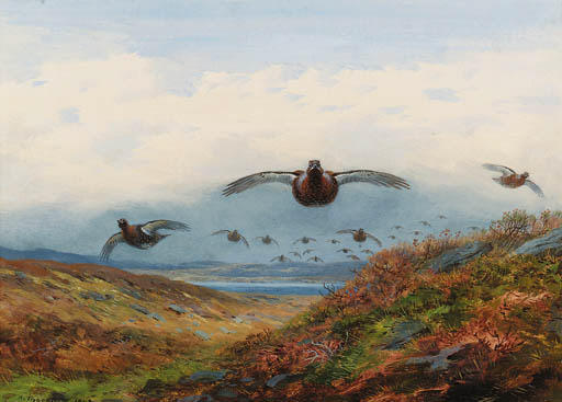 Red Grouse In Flight Over Moorland, Watercolour by Archibald Thorburn (1860-1935, United Kingdom)
