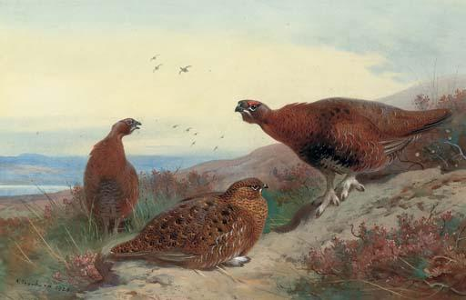 Red Grouse On A Rocky Outcrop, Watercolour by Archibald Thorburn (1860-1935, United Kingdom)