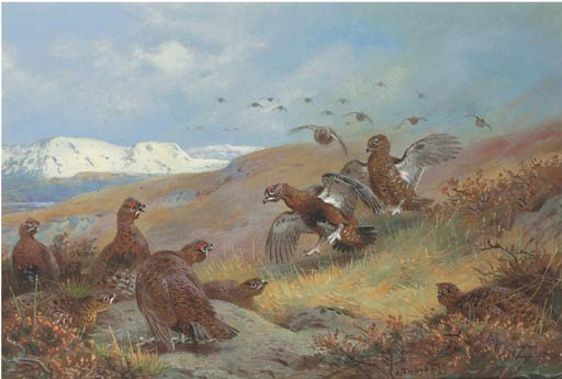 Red Grouse On Moorland, Watercolour by Archibald Thorburn (1860-1935, United Kingdom)