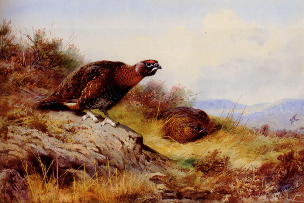 Red Grouse On The Moor, Watercolour by Archibald Thorburn (1860-1935, United Kingdom)