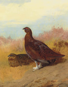 Archibald Thorburn - Red Grouse
