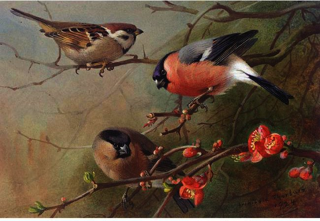 Ree Sparrow And Bullfinches, Watercolour by Archibald Thorburn (1860-1935, United Kingdom)