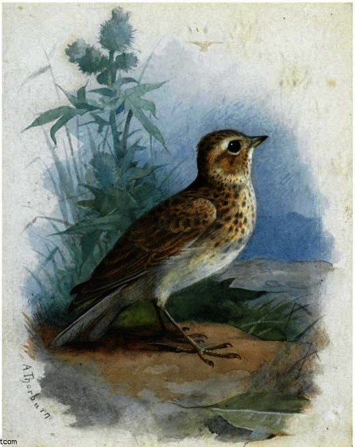 Skylark; Sand Martin; Wood Lark, Watercolour by Archibald Thorburn (1860-1935, United Kingdom)