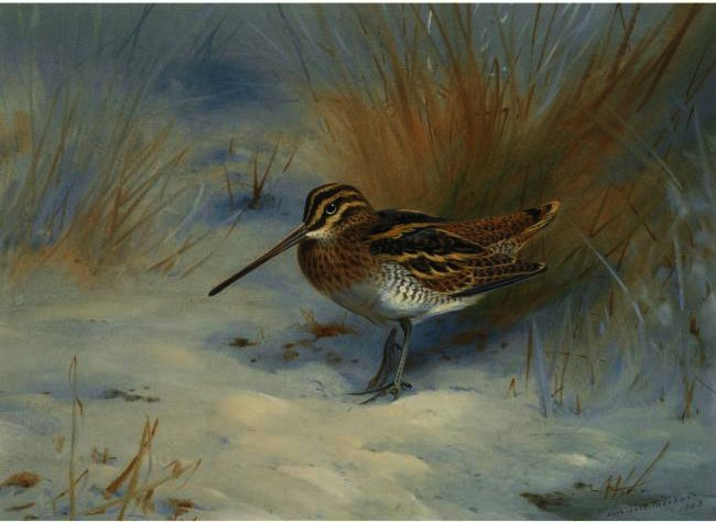 Snipe In The Snow, Watercolour by Archibald Thorburn (1860-1935, United Kingdom)