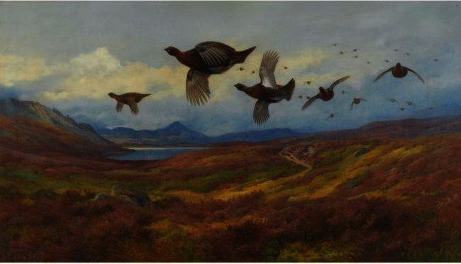Swerving From The Guns-Red Grouse, Watercolour by Archibald Thorburn (1860-1935, United Kingdom)