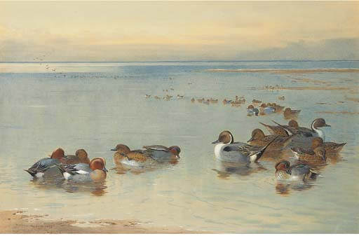 Teal And Widgeon, Watercolour by Archibald Thorburn (1860-1935, United Kingdom)