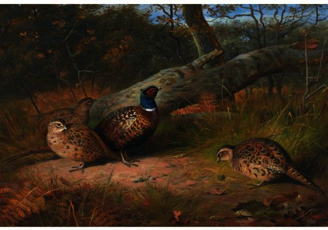 The Fallen Beech- A Cock And Three Hen Pheasants With A Wasp, Watercolour by Archibald Thorburn (1860-1935, United Kingdom)