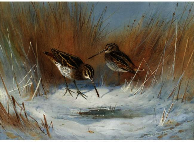 The Frost-Bound Spring, Snipe In Winter, Watercolour by Archibald Thorburn  (buy Fine Art Framed Print Archibald Thorburn)