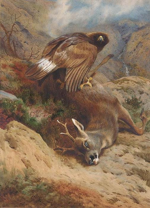 The Lost Roe, Watercolour by Archibald Thorburn (1860-1935, United Kingdom)