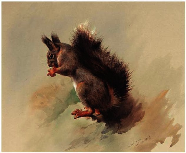 The Red Squirrel, Watercolour by Archibald Thorburn (1860-1935, United Kingdom)