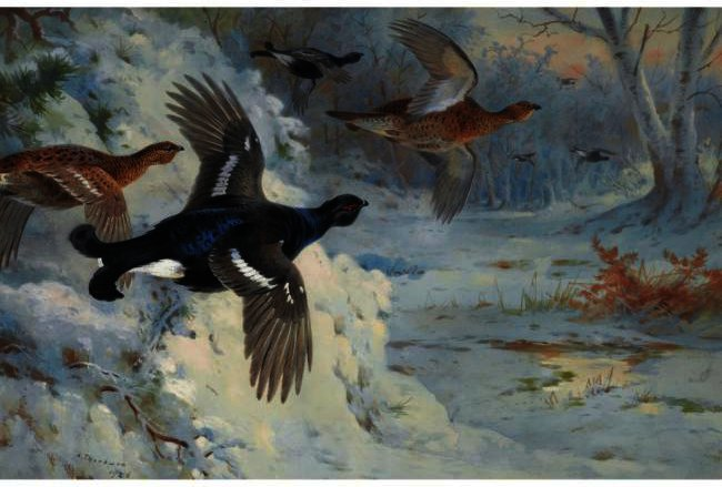 Through The Snowy Coverts-Blackgame, Watercolour by Archibald Thorburn (1860-1935, United Kingdom)