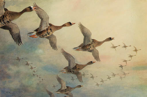 White-Fronted Geese In Flight, Watercolour by Archibald Thorburn (1860-1935, United Kingdom)